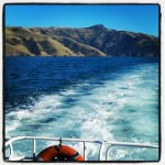 Instagram - Akaroa Harbour