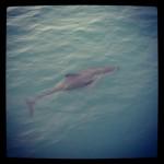 Instagram - Dolphin