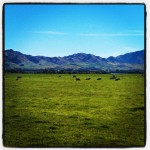 Instagram - Farmland
